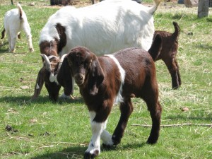 goaties april 2014 021